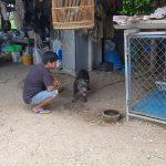 เจ้าของหมาพิตบูลแบนด็อกวัย 56 ปี ล่าสุดเสียชีวิตแล้ว